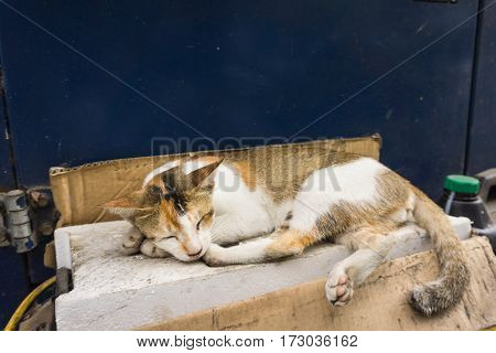 Wild cats with beautiful colour combination white and brown sleeps in side of the road photo taken in Depok Indonesia java poster