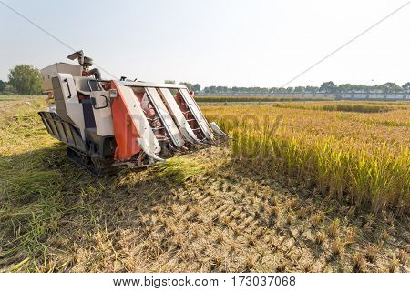 small harvester in golden cereal field in sunny autumn day