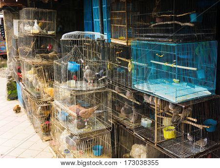 a pet shop selling various kind of birds in cage photo taken in Depok Indonesia java