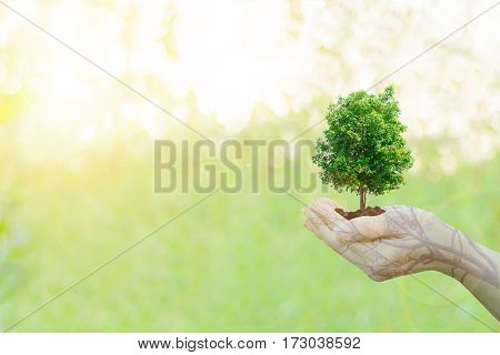 Double Exposure Ecology concept Human hands holding big plant tree with on blurred sunset background,World Environment Day,