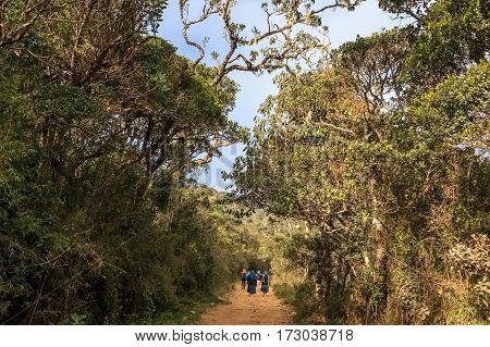 Scenic view of savanna with walking path in Horton Plains national park, Sri Lanka