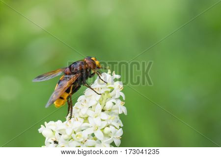 Tinny cute fly sitting on a white flower.