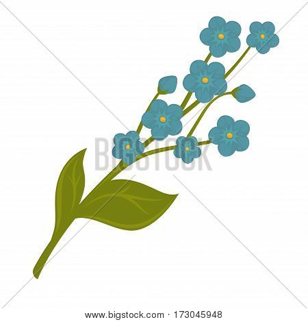 Fresh blue forget-me-not flower bundle isolated on white. Vector close up illustration of brunch with many azure little blooming buds. Seasonal aromatic plant with blue forget-me-not flowers.