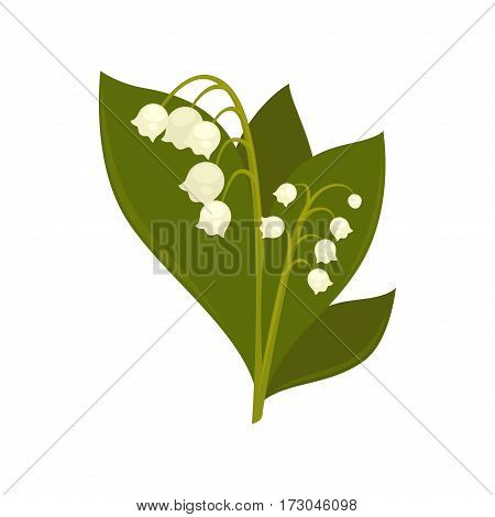 Twigs of close up lily of the valley isolated vector picture on white. Colorful branch of spring symbolic small flowers in shape of bells on stems with big leaves. Lily of the valley flower branch