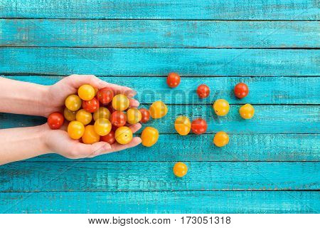 top view of hands holding cherry-tomatoes on table