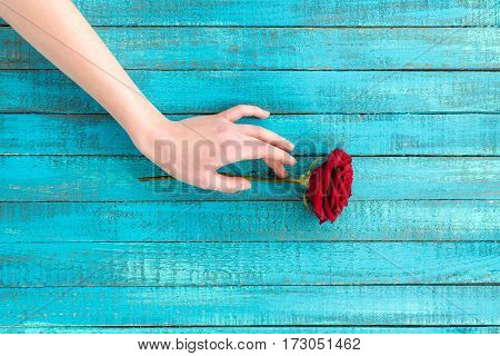 top view of female hand touching rose flower
