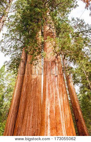 Sequoia National Park at autumn. California, United States.