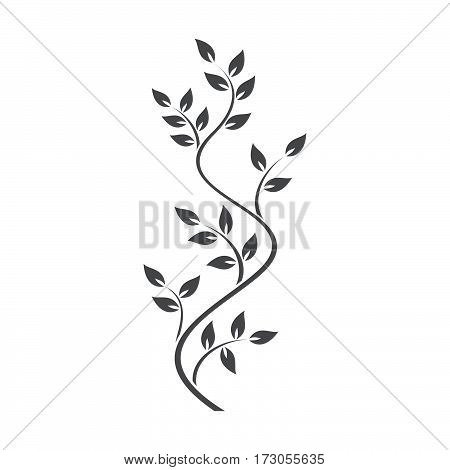 Natural ornamentation with ivy on white background