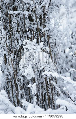 Winter landscape with Snowy Forest stock photo