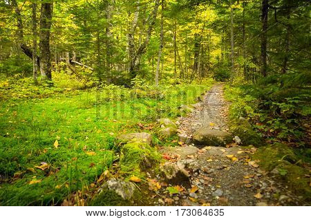 A dirt path through the forest and grass