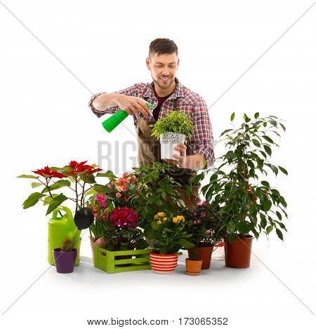 Male florist with beautiful house plants on white background