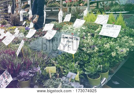 Flower shop full bloom at marketplace