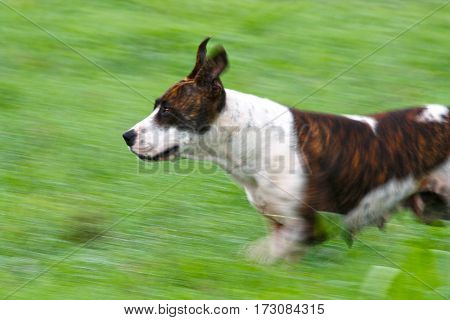 female dog in action canine pet green grass