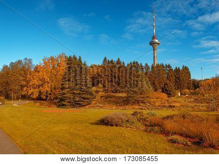 yellow autumn forest with tv tower on horizon in sunny day. Tallinn Estonia