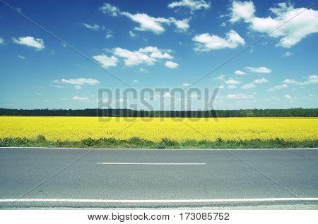 huge rape field in brandenburg germany .