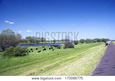 cyclists on a the elbe bike tour in sachsen-anhalt germany