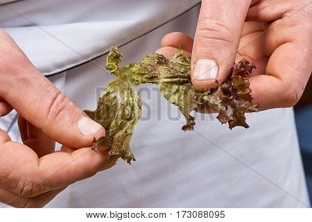 man's hands adding lettuce leaves into bowl with salad, close-up