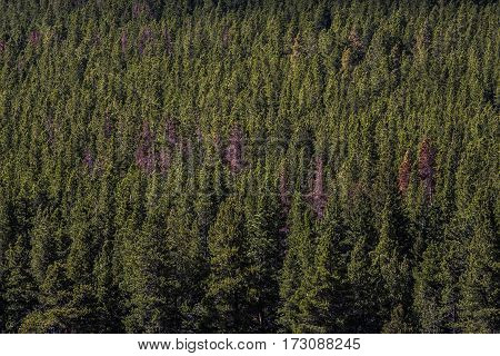 A Few Dead Trees In A Forest