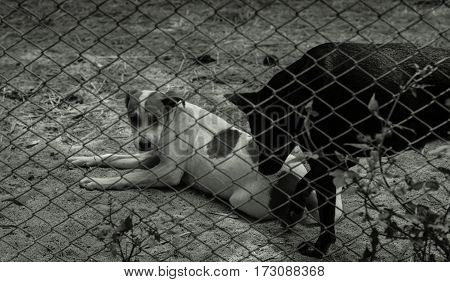 black and white image of stray dog in cage.
