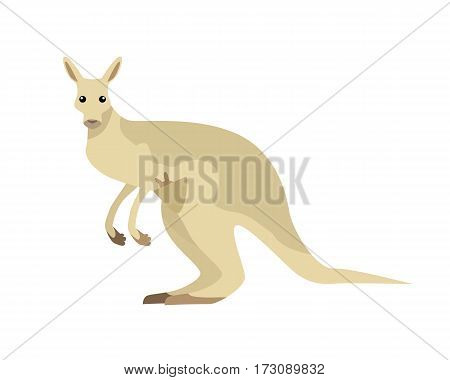 Kangaroo with baby flat style vector. Wild herbivorous marsupial animal. Australian fauna species. For nature concepts, children s books illustrating, printing materials. Isolated on white background
