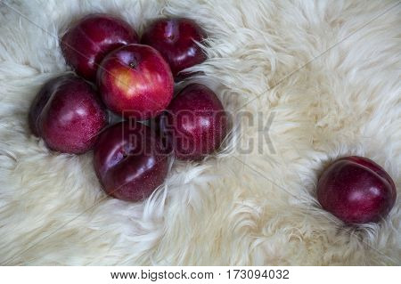 One plum near six plums on the white fur