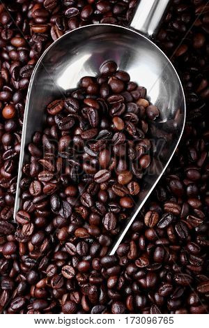 Coffee beans with metal scoop .Closeup. selective focus