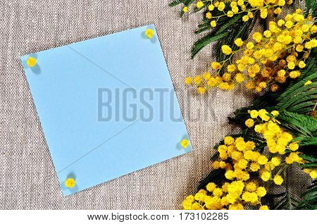 Spring flowers of mimosa and blue card with space for text on the brown linen tablecloth -spring background for spring holiday text. Beautiful spring still life with mimosa spring flowers