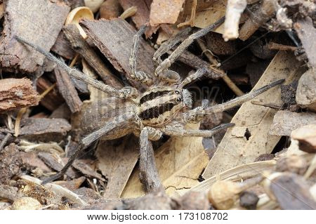 Closeup of the nature of Israel - spider on the ground