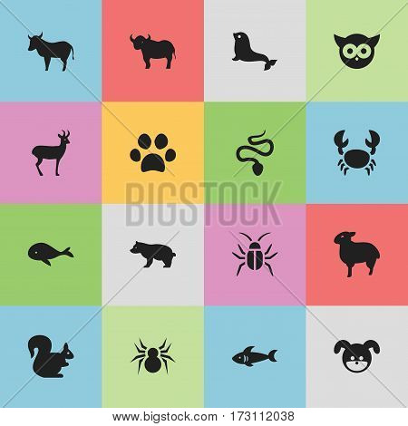 Set Of 16 Editable Zoology Icons. Includes Symbols Such As Sea Calf, Shark, Lamb And More. Can Be Used For Web, Mobile, UI And Infographic Design.