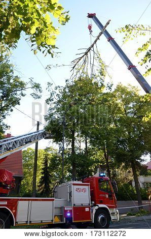 Action firefighters - removing broken tree (Poland)