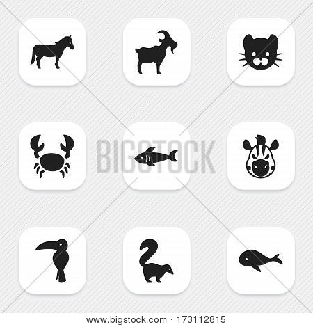 Set Of 9 Editable Nature Icons. Includes Symbols Such As Ocean Blower, Feline, Shark And More. Can Be Used For Web, Mobile, UI And Infographic Design.