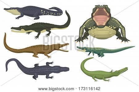 Cartoon green crocodile danger predator and australian wildlife river reptile carnivore alligator with scales teeth flat vector illustration. Tropical africa safari zoo character crocodylus.
