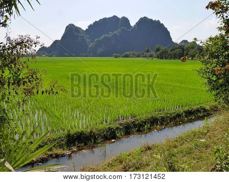 Green asian rice field with small water stream in front of distant shadowy mountain