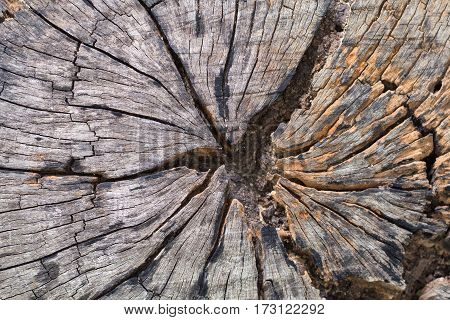 wood crack background , old wood texture