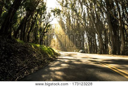 Light shining through a forrest on to the road