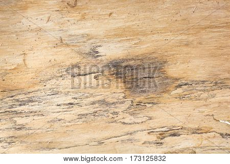 Tree bark texture / background / backdrop