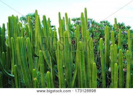 A wonderful green cactus in a hot defers. Sunshine day, beautiful wild nature