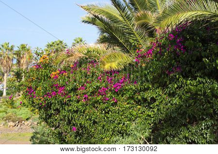 The beautiful plants on a summer day. The higt palm trees, flowers and wonderful blue sky.
