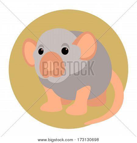 rat vector illustration style Flat  front side