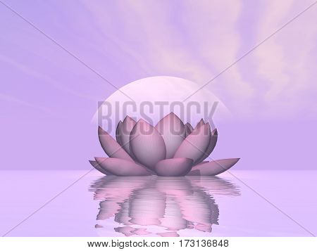 Single lily lotus flower upon water in violet sunset background - 3D render