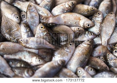 Fresh Fish In The Fresh Market Or Supermarket