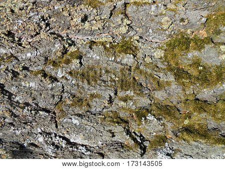 Dark Bark Background Photo Manipulation