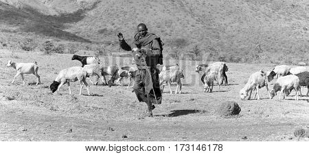 NGOROGORO -TANZANIA, OCTOBER 17: Masai warrior walking through the savanna October 17 Ngorogoro, Tanzania. The Maasai are a Nilotic group in East Africa, next to the Indian Ocean.