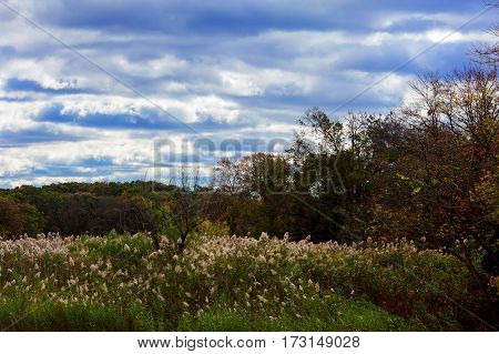 Autumn Landscape. Yellow Trees, Blue Sky And Lake. Nature Scenery In Fall.