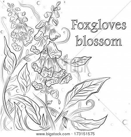 Vector floral blossom beautiful nature garden digitalis purple foxglove linear flower pattern background with blooming plants hand drawn in green outline isolated white background. Postcard design