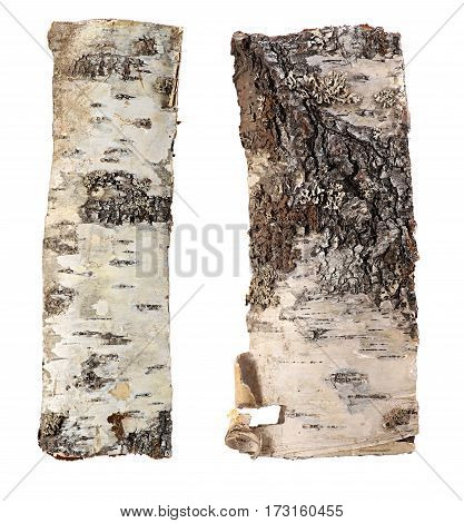 birch bark background isolated on white a background.