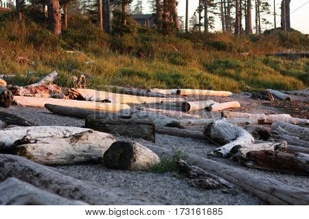 Sunset, logs on a beach with trees in background
