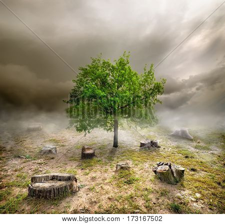 Green tree among the stumps in cloudy day