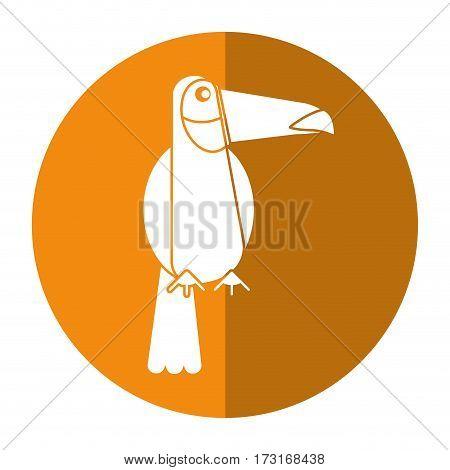 toucan bird exotic fauna shadow vector illustration eps 10