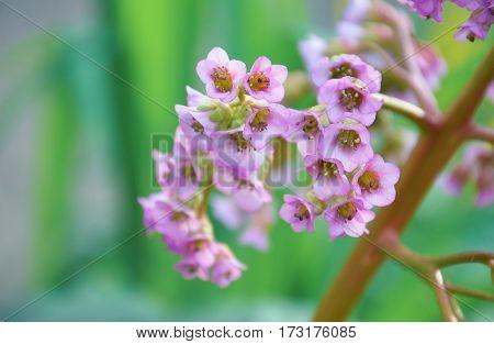 pink marsh flower in the beautyfull garden